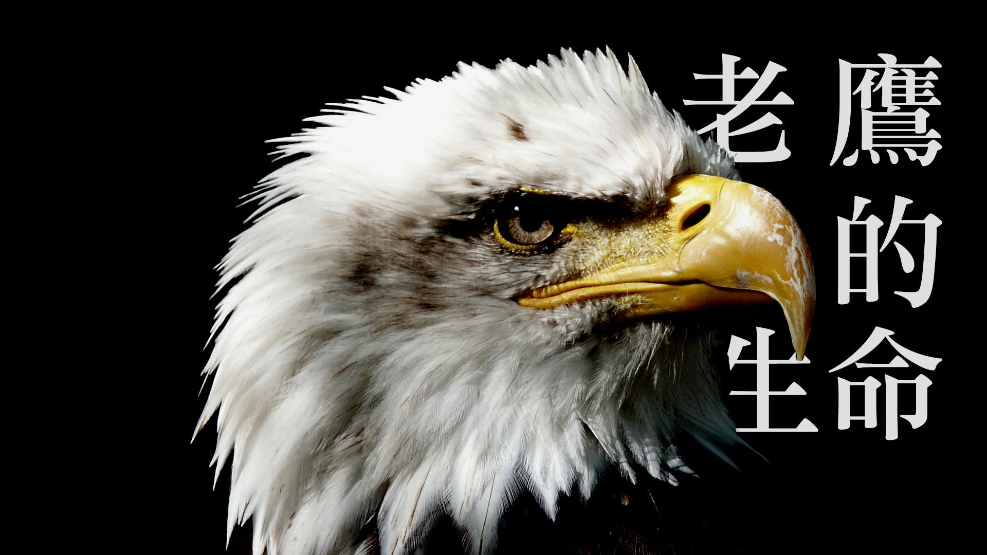 老鷹的生命|張光偉牧師